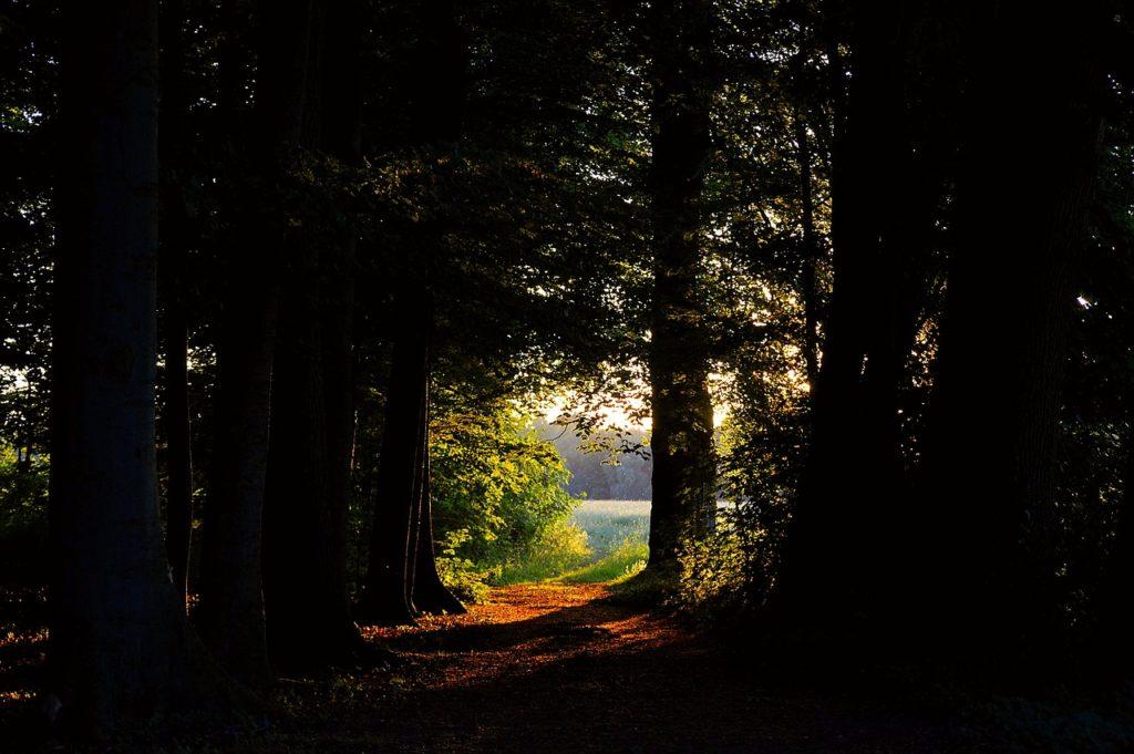 Aus dem dunklen Wald der Blick auf eine sonnenbeschienene Lichtung.